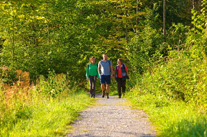 Walkers enjoy the trails through the forest
