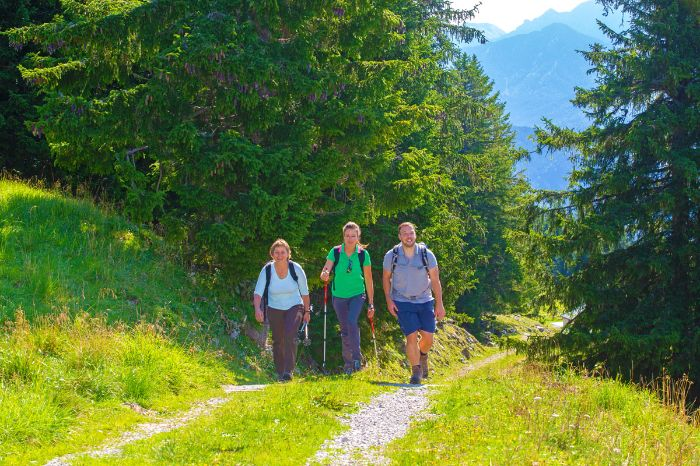 Walkers on beautiful forest paths