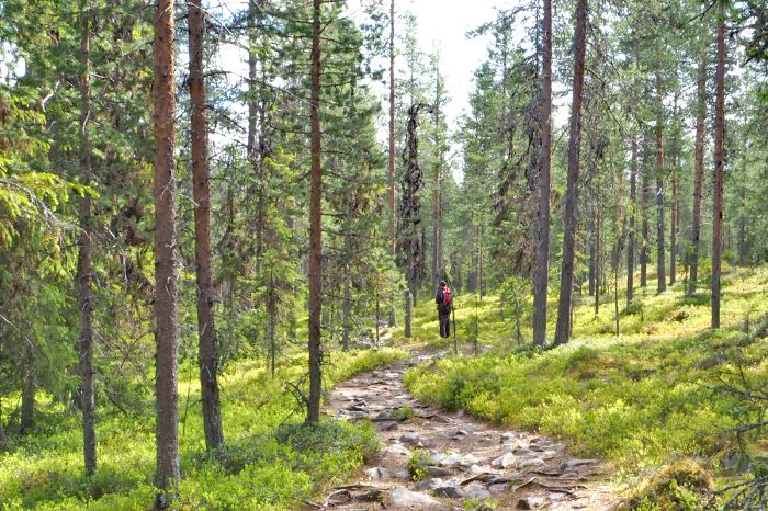 Hiking trails through beautiful forests
