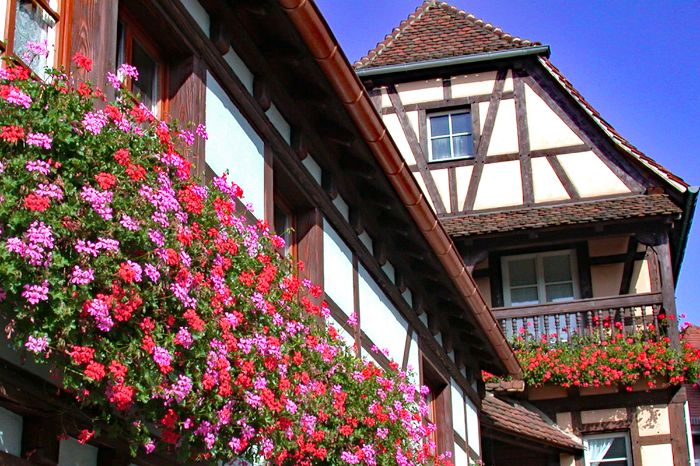Visit la maison à colombage with beautiful flowers on the hiking tour