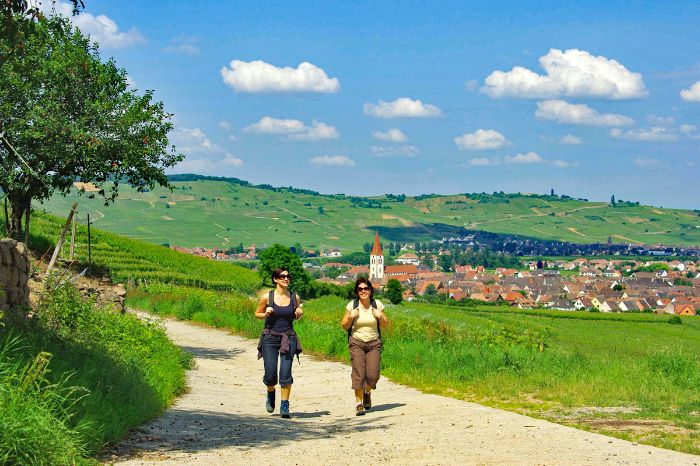 Hiking without luggage in Ammerschwihr