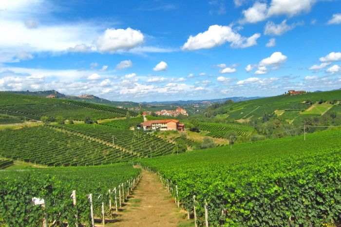 Enchanting vineyards in Piedmont