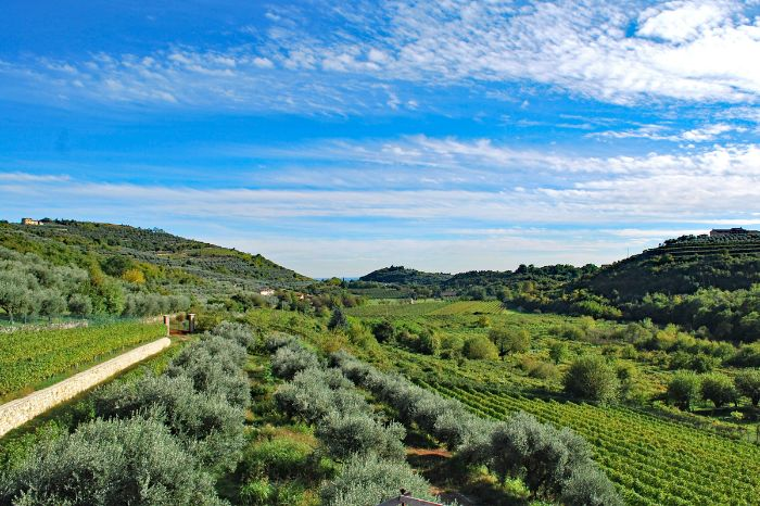 Hiking along impressing olive and vineyards