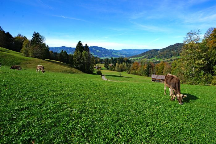 Calm mountain life in Vorarlberg
