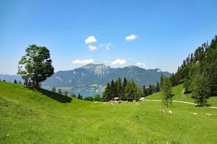 Unspoilt hiking trails at Scharten alp above lake Wolfgangsee