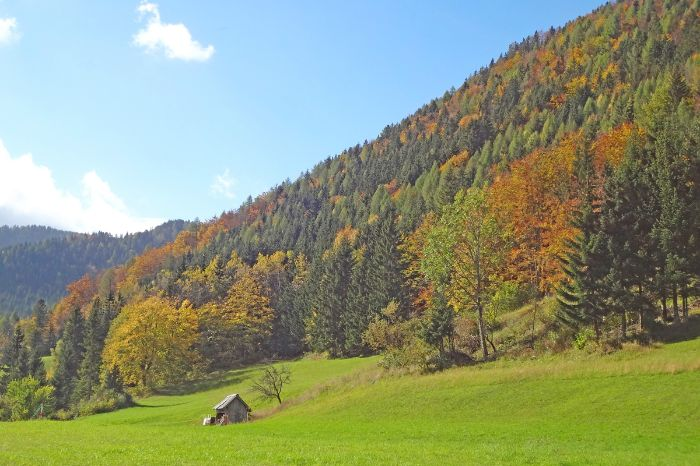 Autumn in the Carinthia forests