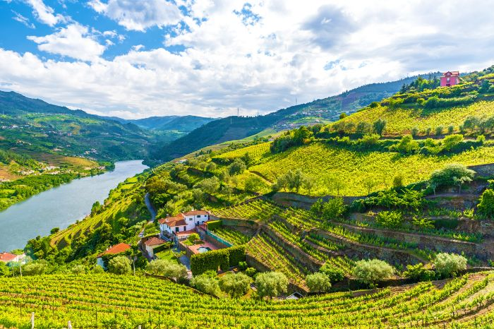 Walking paradiese Douro valley in the middle of green vineyards