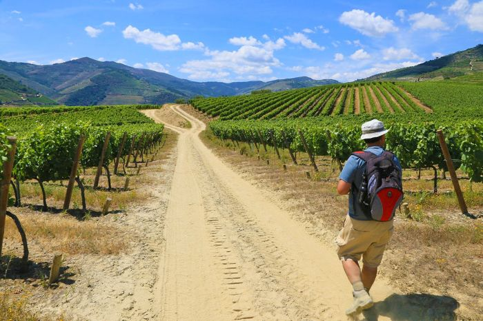 Hiker in the middle of green vineyards of the Douro-valley