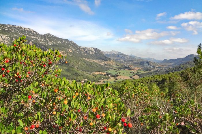 Panoramic hikes through blooming nature in Orient valley
