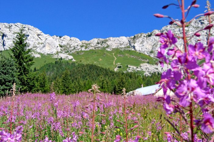 Hiking trails through Vercors vast vegetation