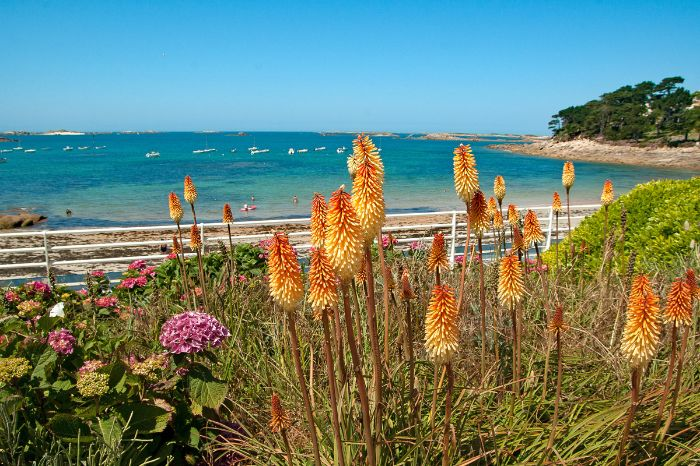 Panoramic view of the beach with flowers