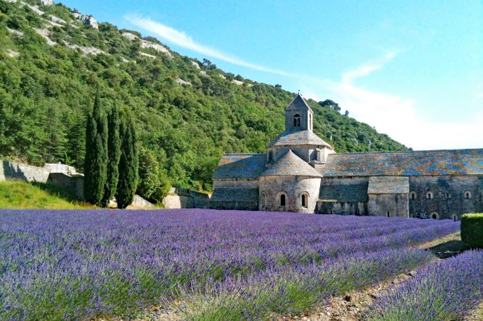 Walking along lavender fields to the monastery Sénanque