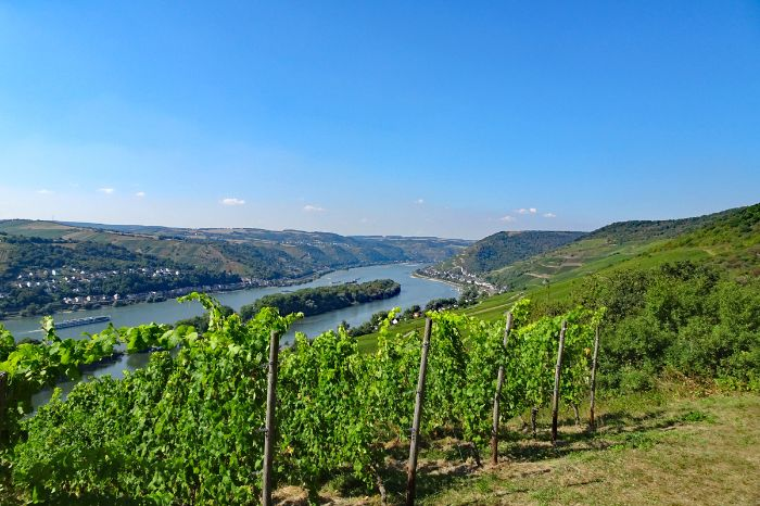 Hiking trails through vineyards on the Rheinsteig