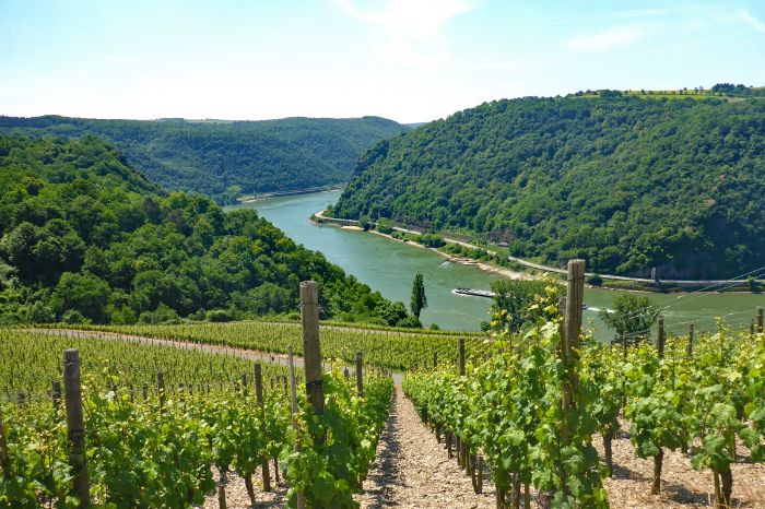 Hiking with view onto vineyards and river Rhine