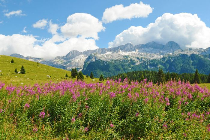 Hiking with a view to the Carnic Alps