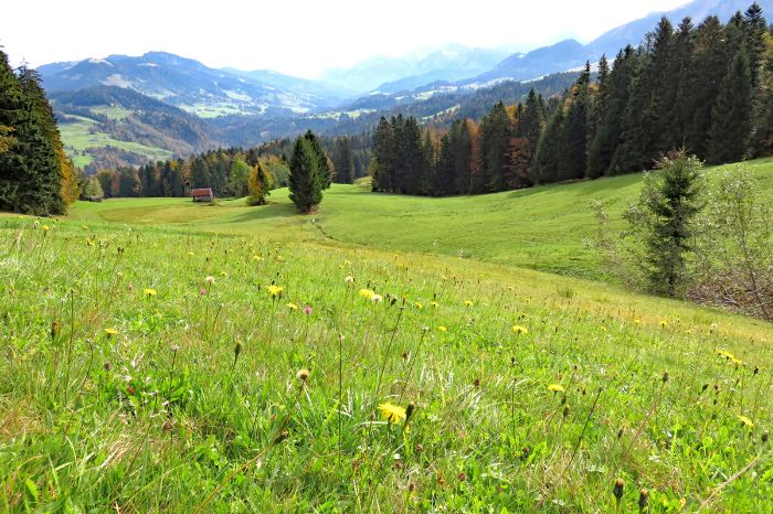 Flower meadow at the Bregenz Forest