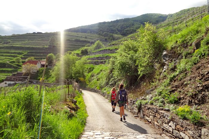 Hiking trail through vineyards in the Wachau
