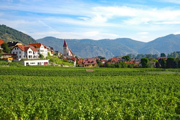Hiking with view to Weißenkirchen and vineyards