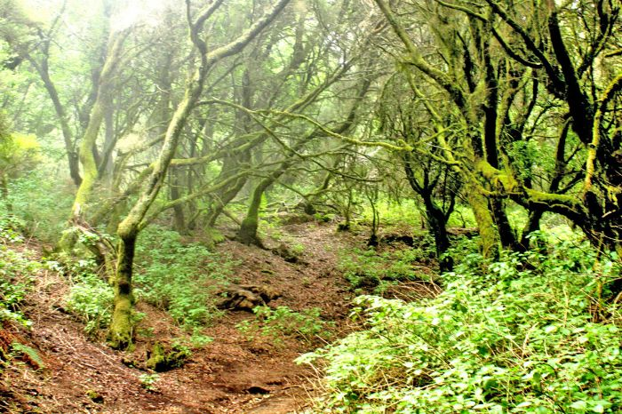 Romantic hiking paths on El Hierro
